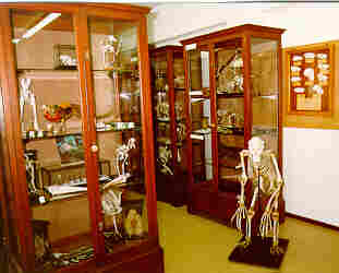 Click for a larger image of: Zoology Museum